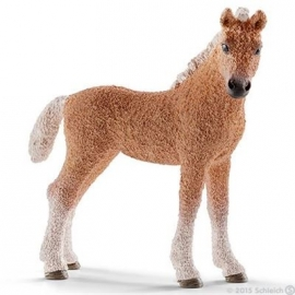 Schleich - World of Nature - Farm Life - Bashkir Curly Fohlen